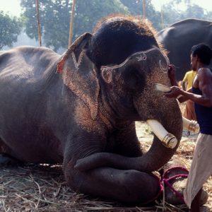 Expériences Hors des Sentiers Battus | Voyage en Inde
