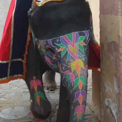 Éléphant à Jaipur au fort d'Amber