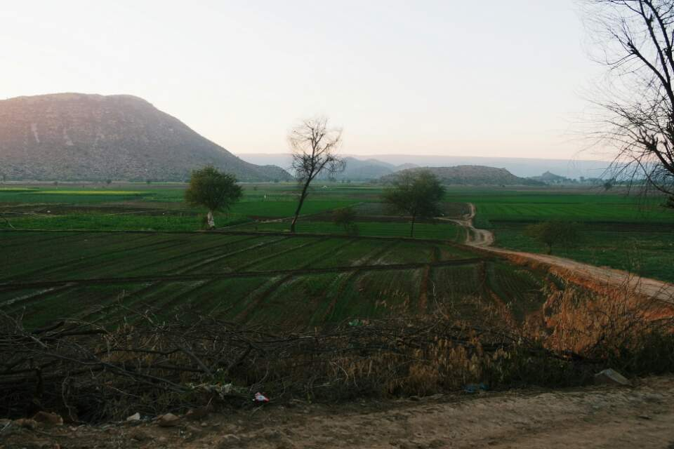 Campagne Rajasthan